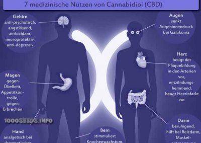cbd-medizinische-Wirkung